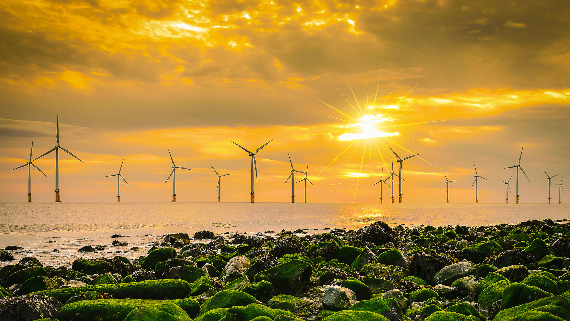 Offshore windfarm with a sunset