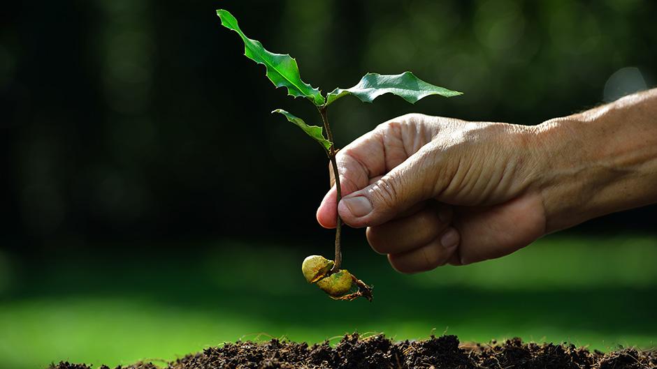 Cultivate 10