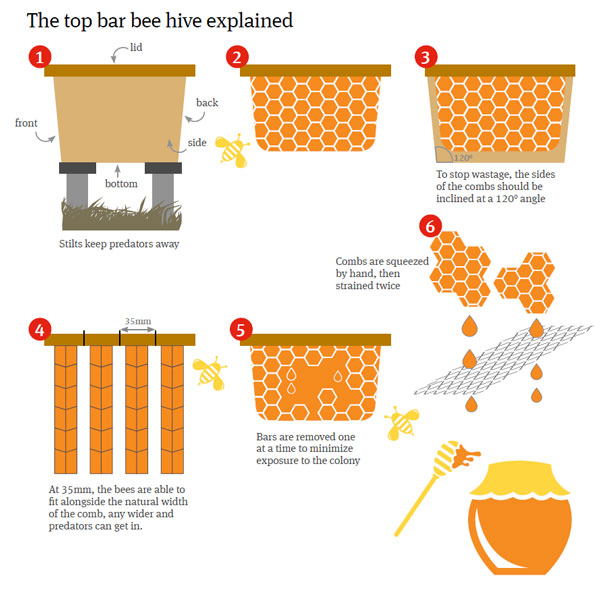 Cultivate bee hive flowchart