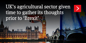 UK's agricultural sector given time to gather its thoughts prior to 'Brexit'