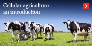 Cullular agriculture