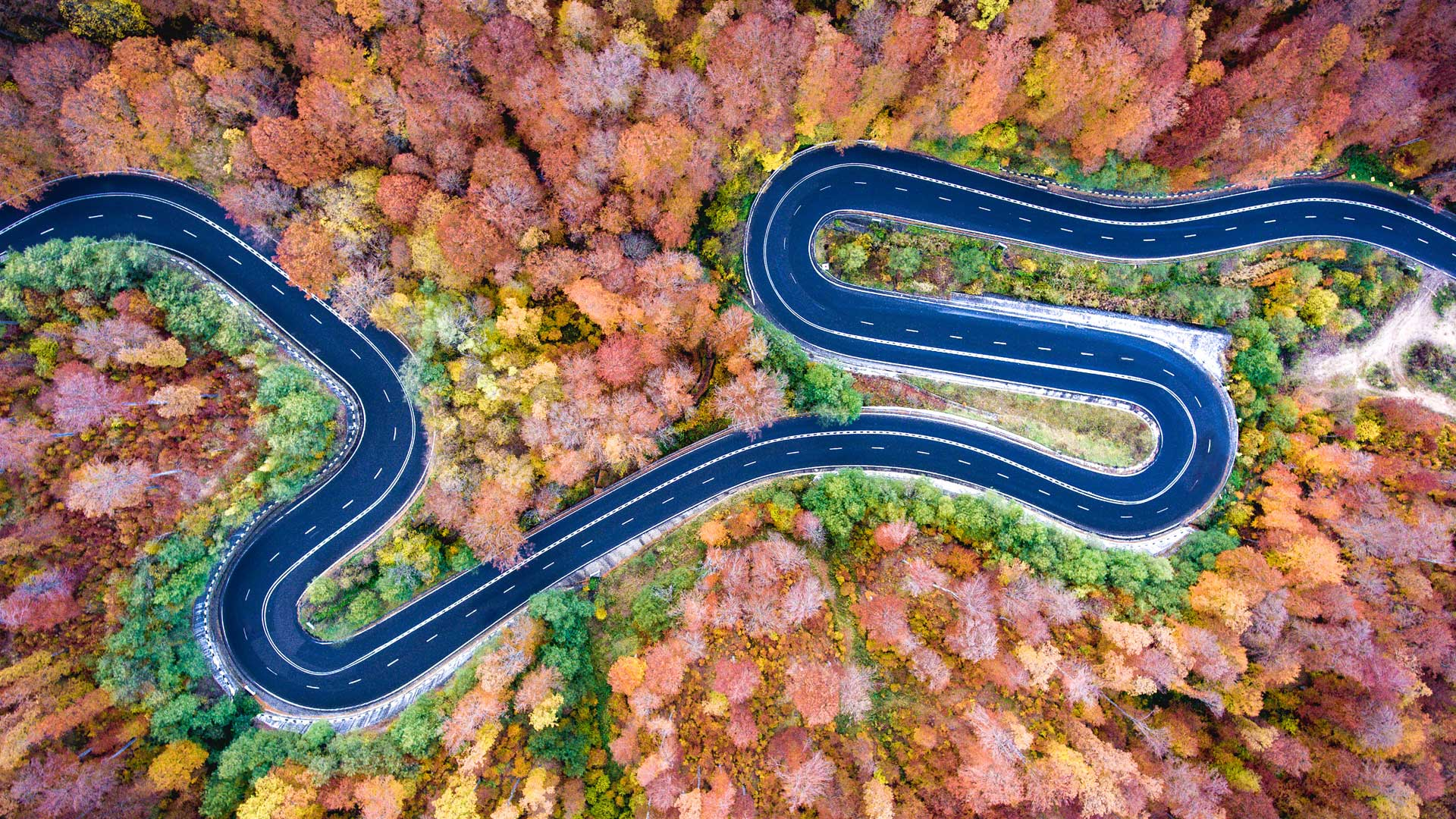 winding road in colourful forest