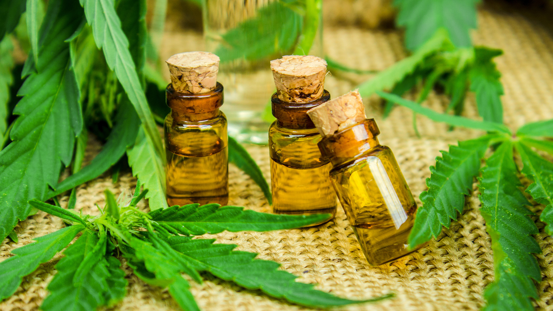 Cannabis leaves and oil