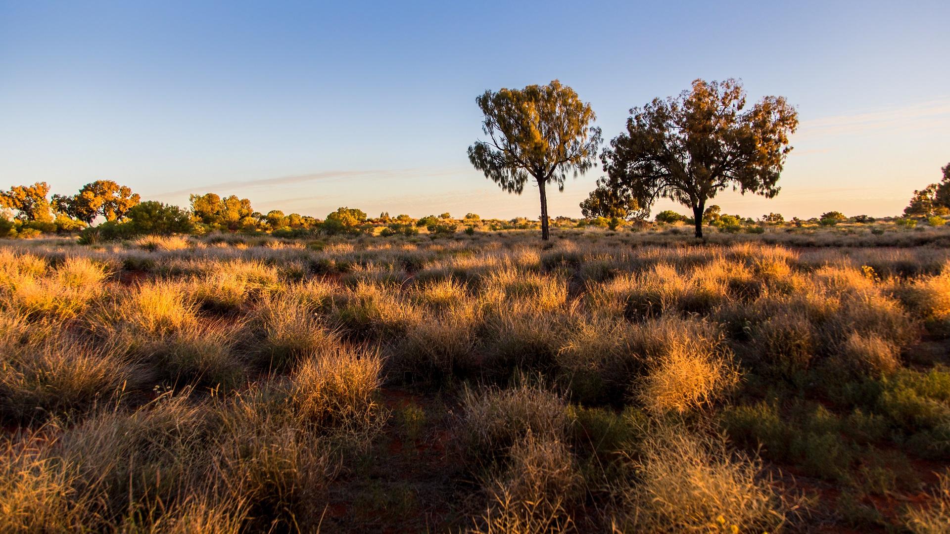 Australian bushland and trees landscape