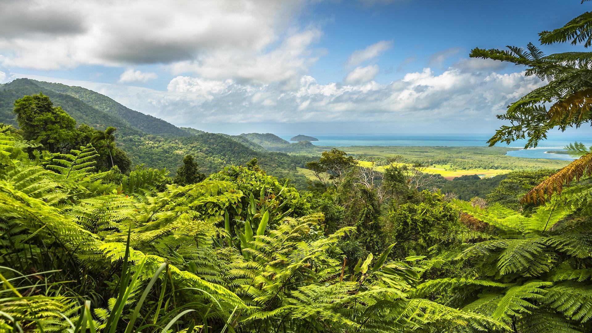 Green rainforest in Queensland