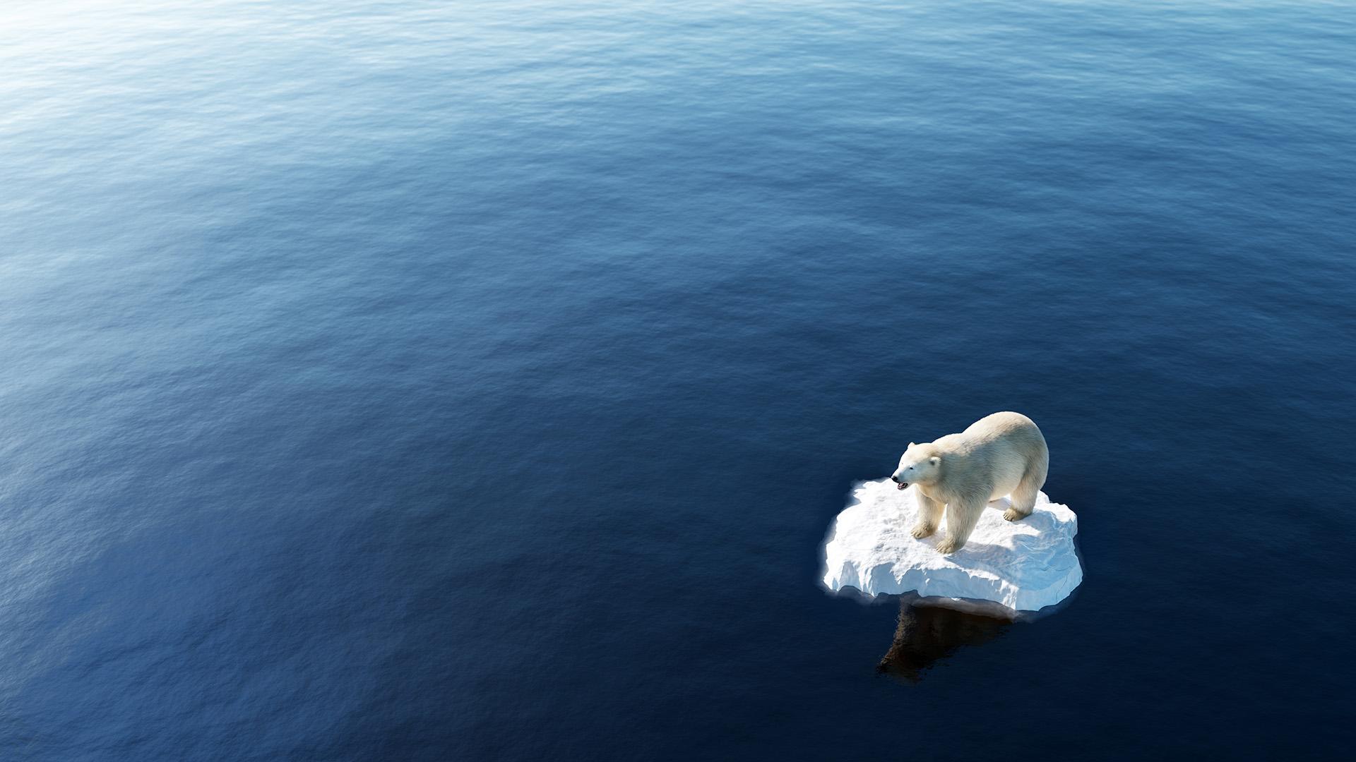 Climate change litigation update