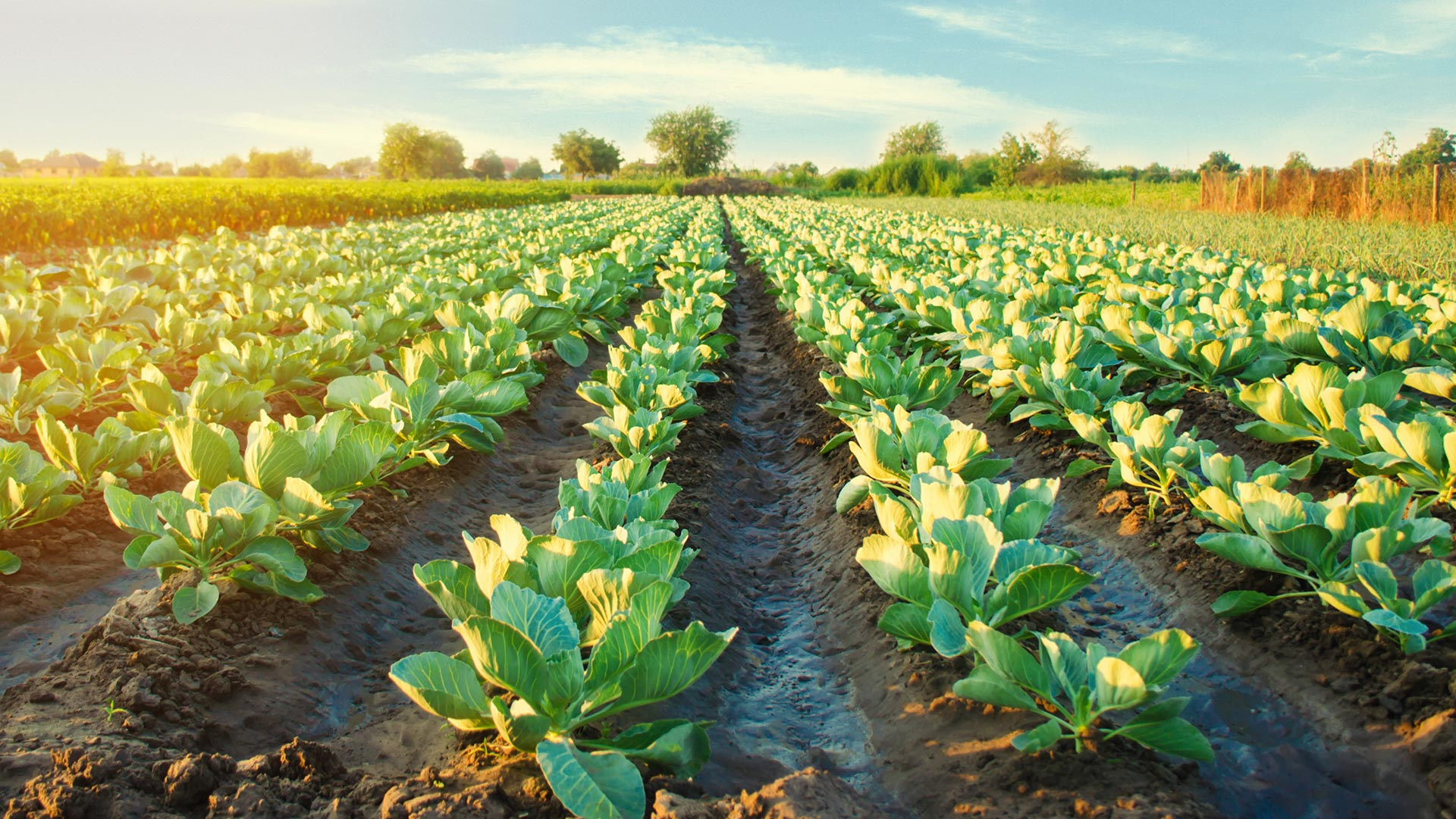 EU relaxes antitrust restrictions in the food and agriculture sectors