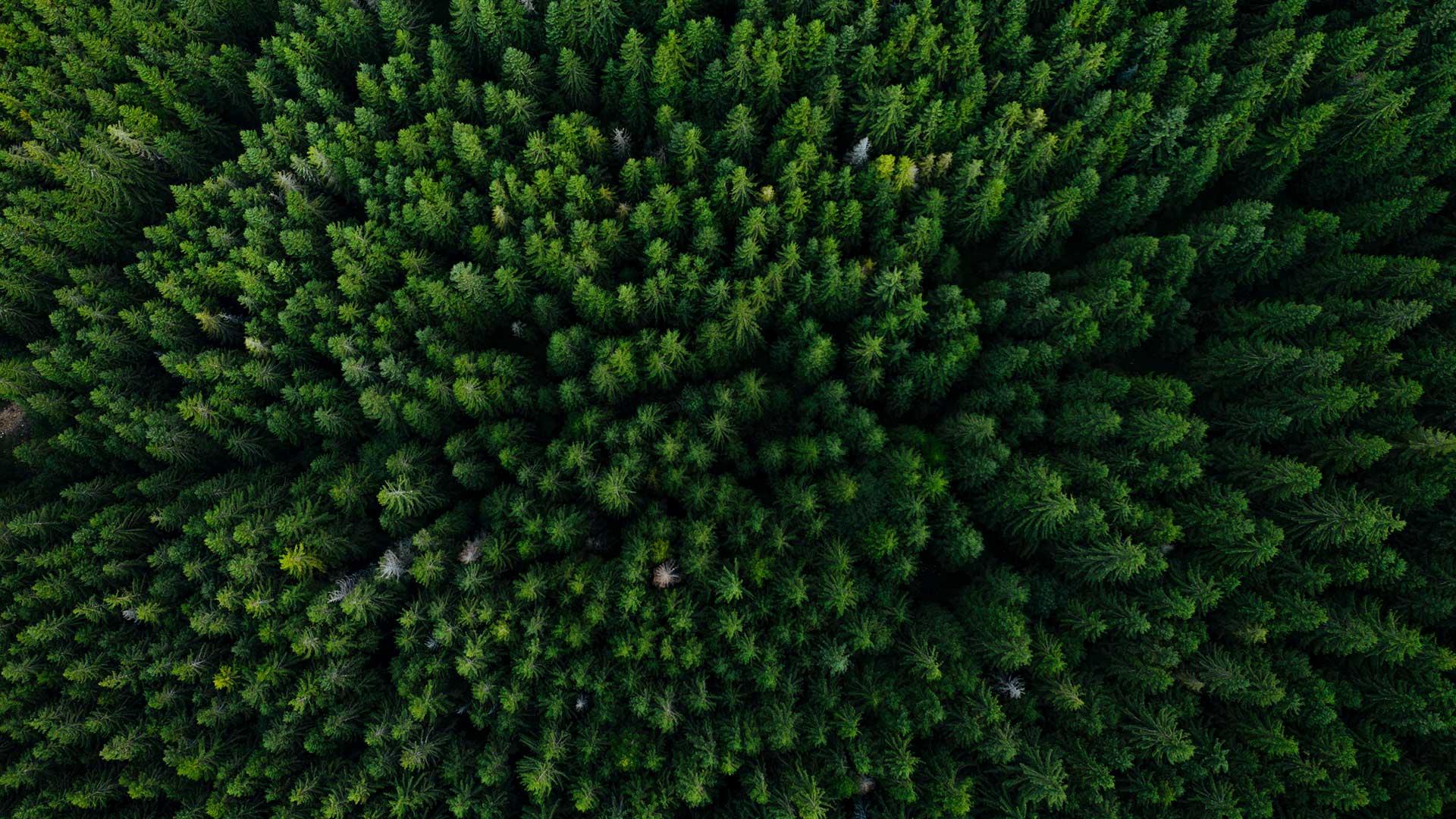 Alberta announces new competitive process for carbon storage tenures